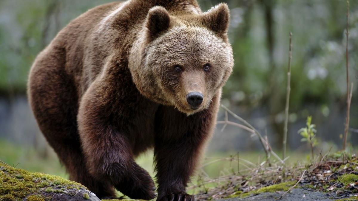 Le 10 specie a rischio estinzione in Italia