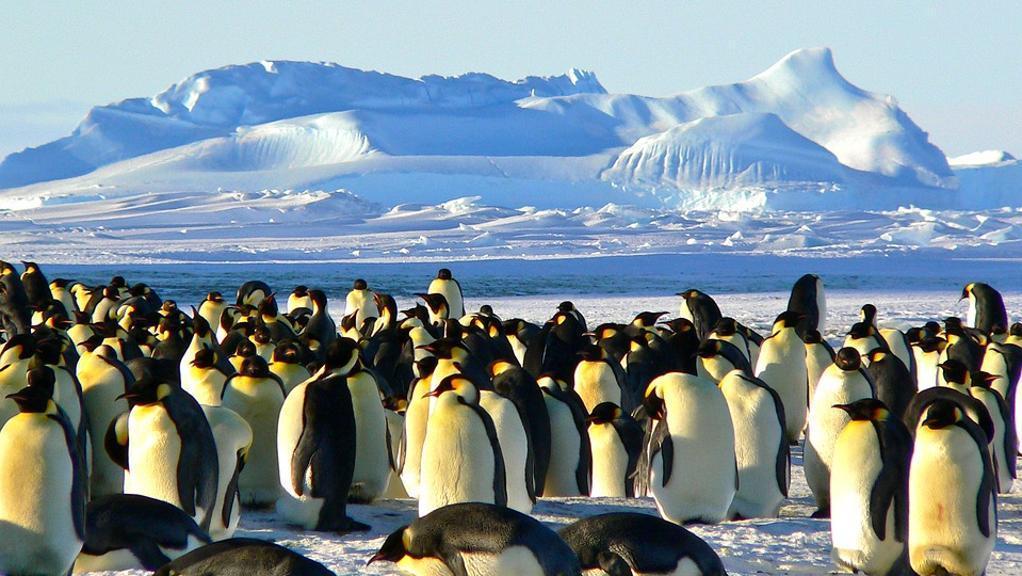 Sparita un'intera colonia di pinguini