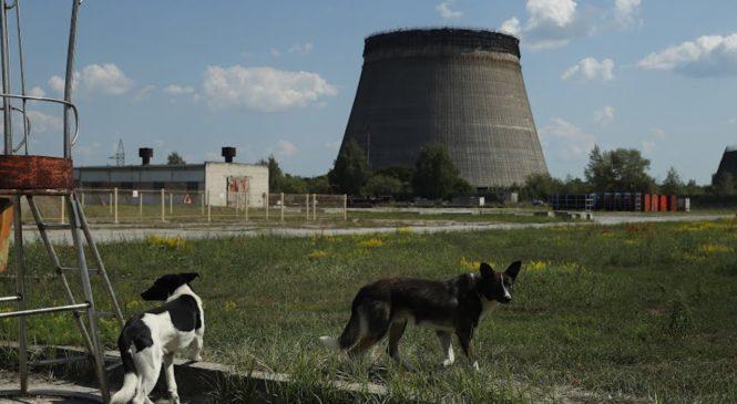 Gli animali di Chernobyl