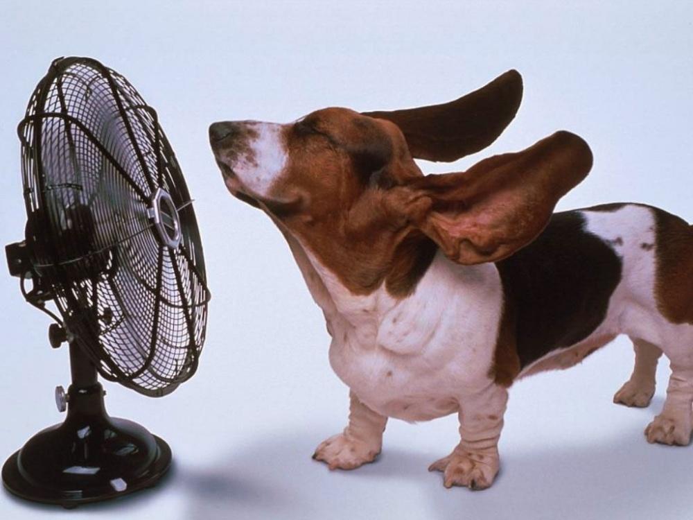 Colpo di calore del cane
