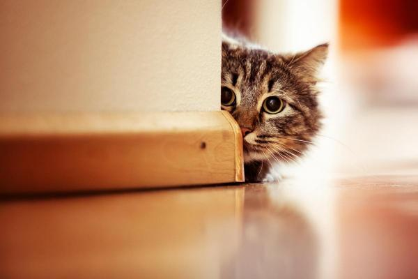 Le paure dei gatti: quali sono e come aiutarli?