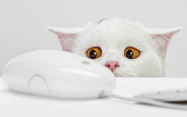 Di cosa ha paura il gatto?