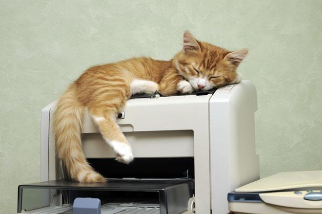Animali domestici in ufficio
