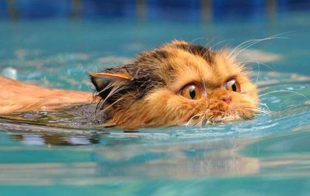 I gatti hanno paura dell'acqua?