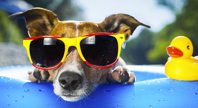 Colpo di calore del cane: prevenirlo e curarlo
