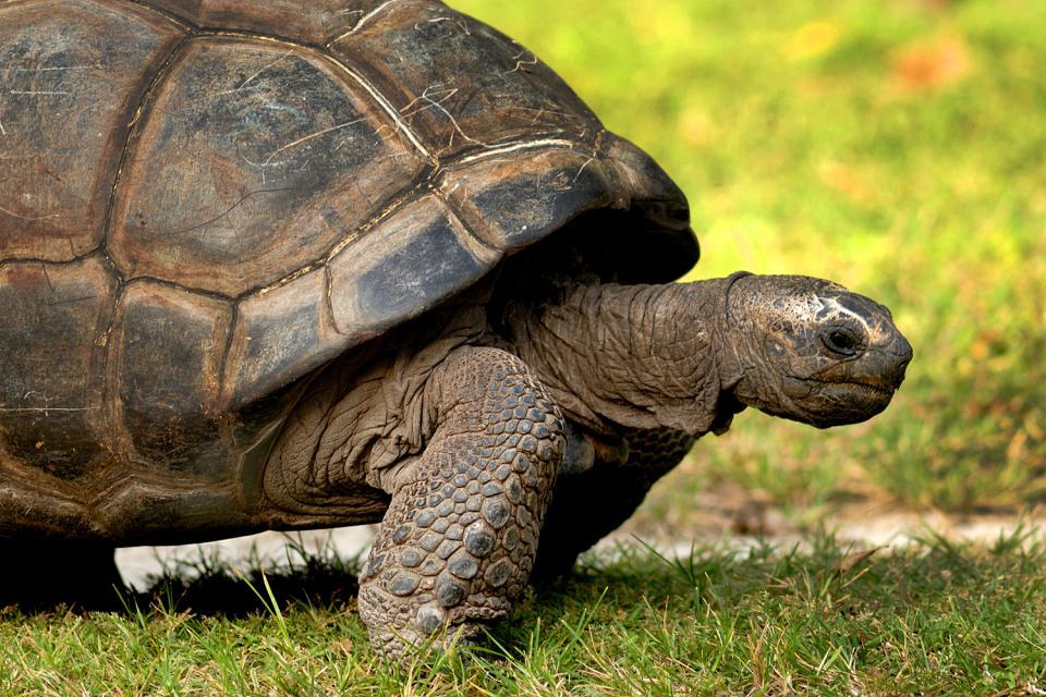 Gli animali più longevi del mondo