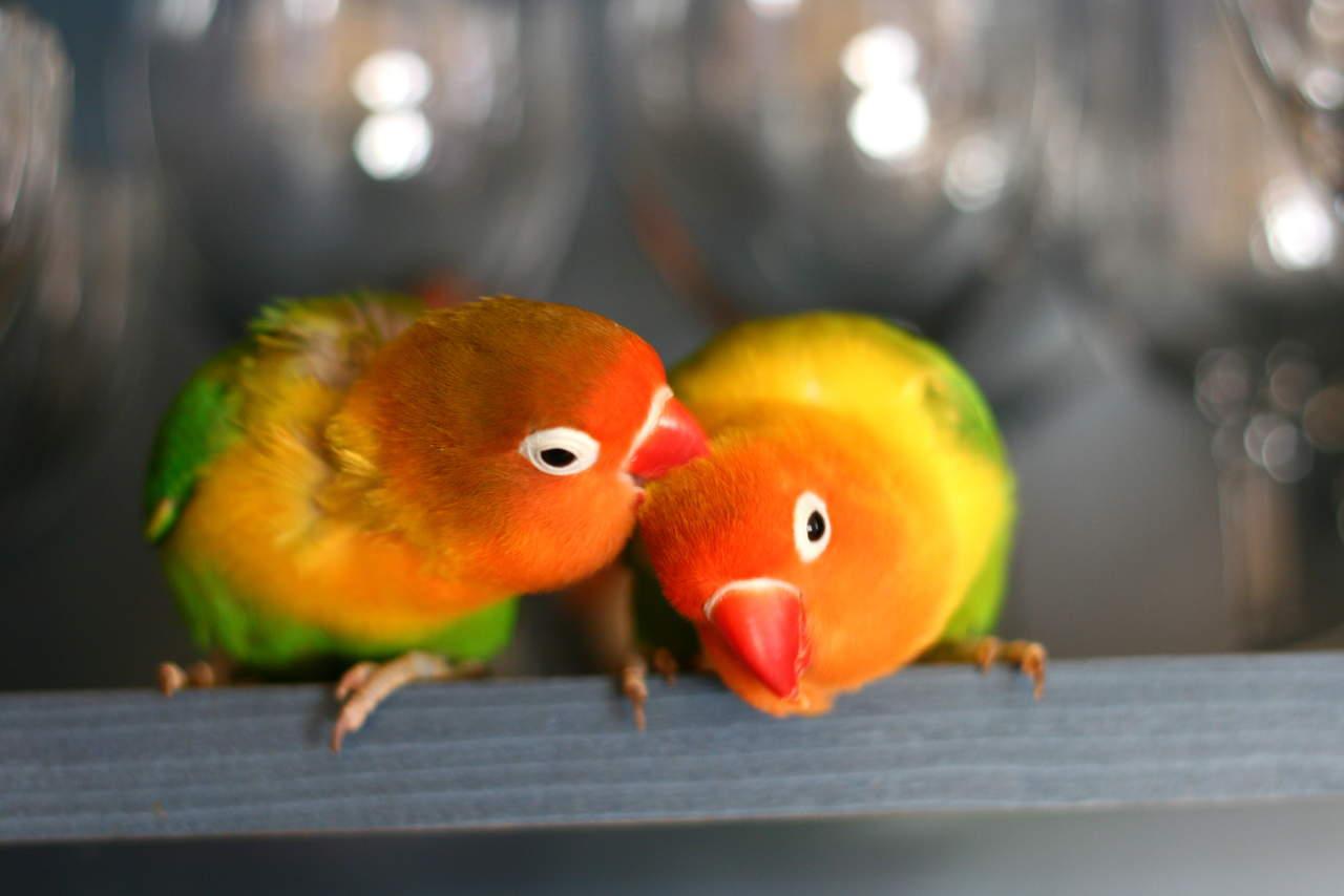 L'amore eterno: 10 animali monogami