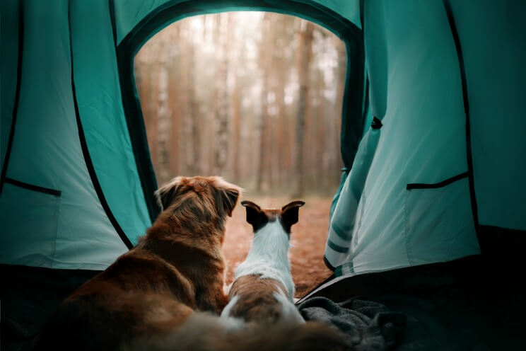 Campeggio con il cane