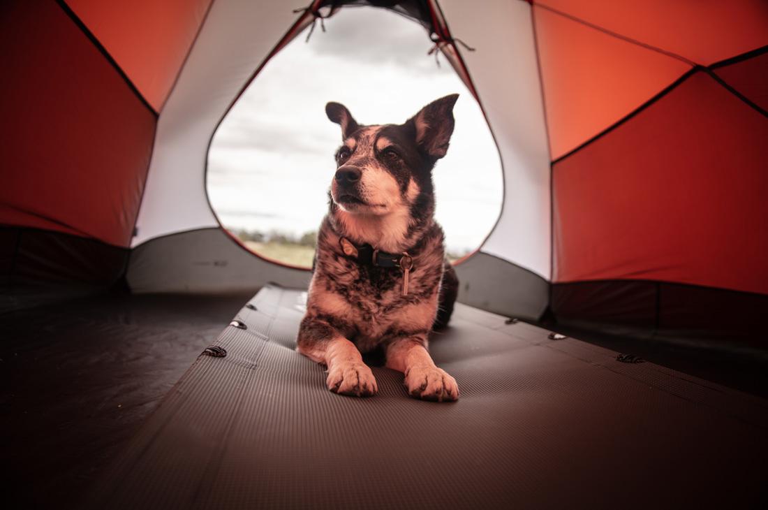 In campeggio con il cane
