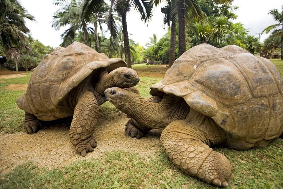 I 10 animali più longevi del mondo