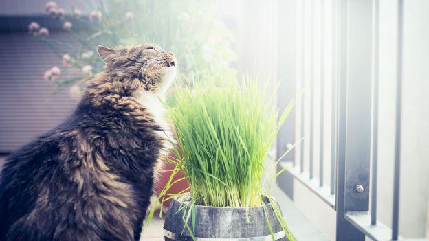 Perché i gatti mangiano l'erba?