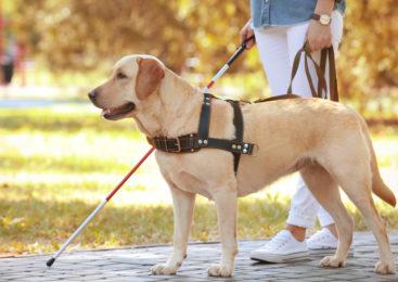 Cosa dobbiamo sapere sui cani guida per non vedenti