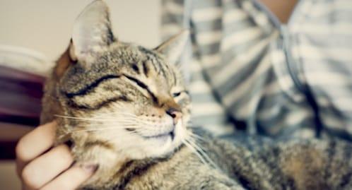 10 motivi per avere un gatto