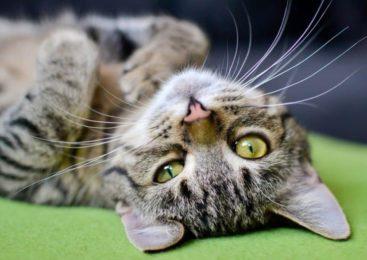 10 motivi per avere un gatto in casa