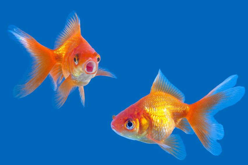 Il dolore dei pesci