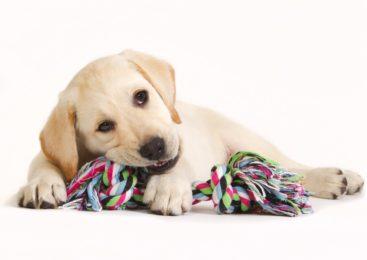 10 errori da evitare quando ci prendiamo cura di un cane
