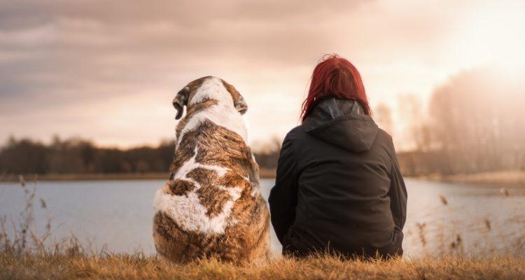 L'amore dei cani
