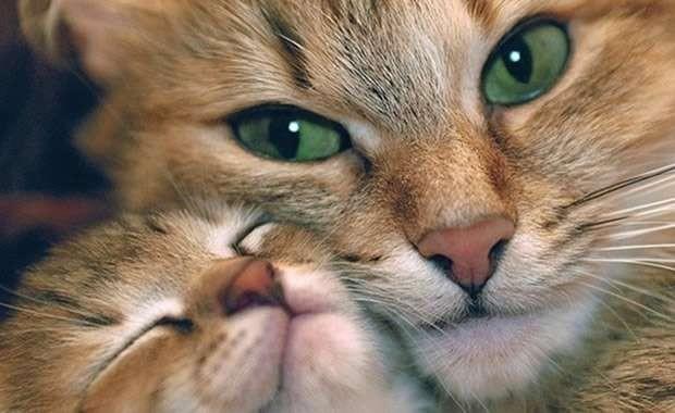 I comportamenti di mamma gatta