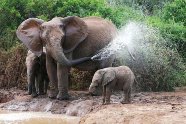Essere mamma nel regno animale