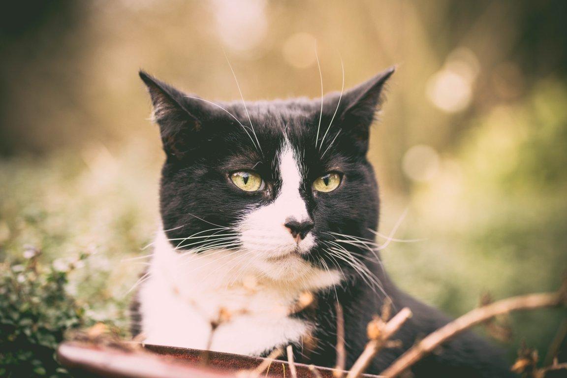 Prendersi cura di un gatto anziano