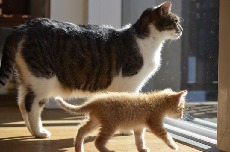 Cucciolo e gatto anziano