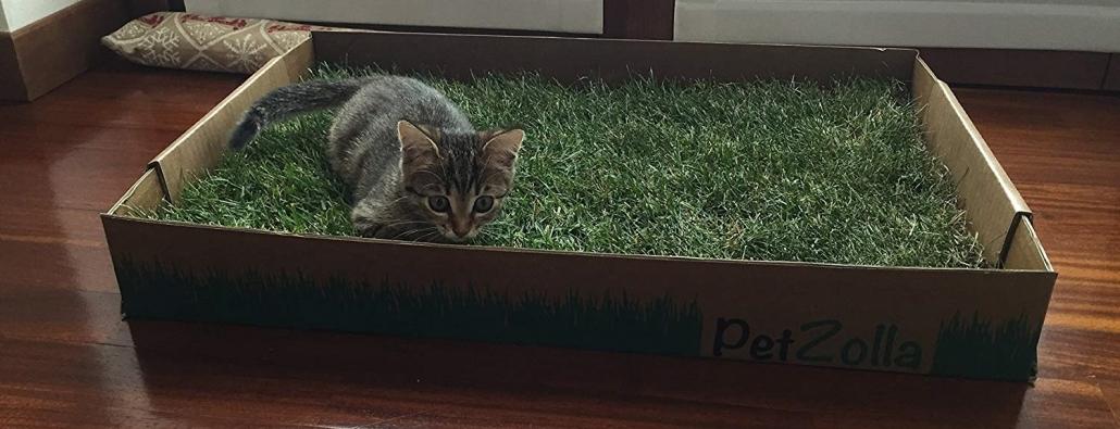 Lettiera del gatto
