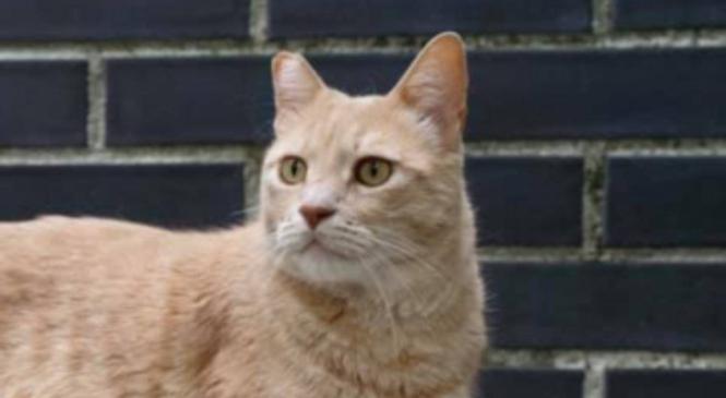 Vito: il gatto bionico