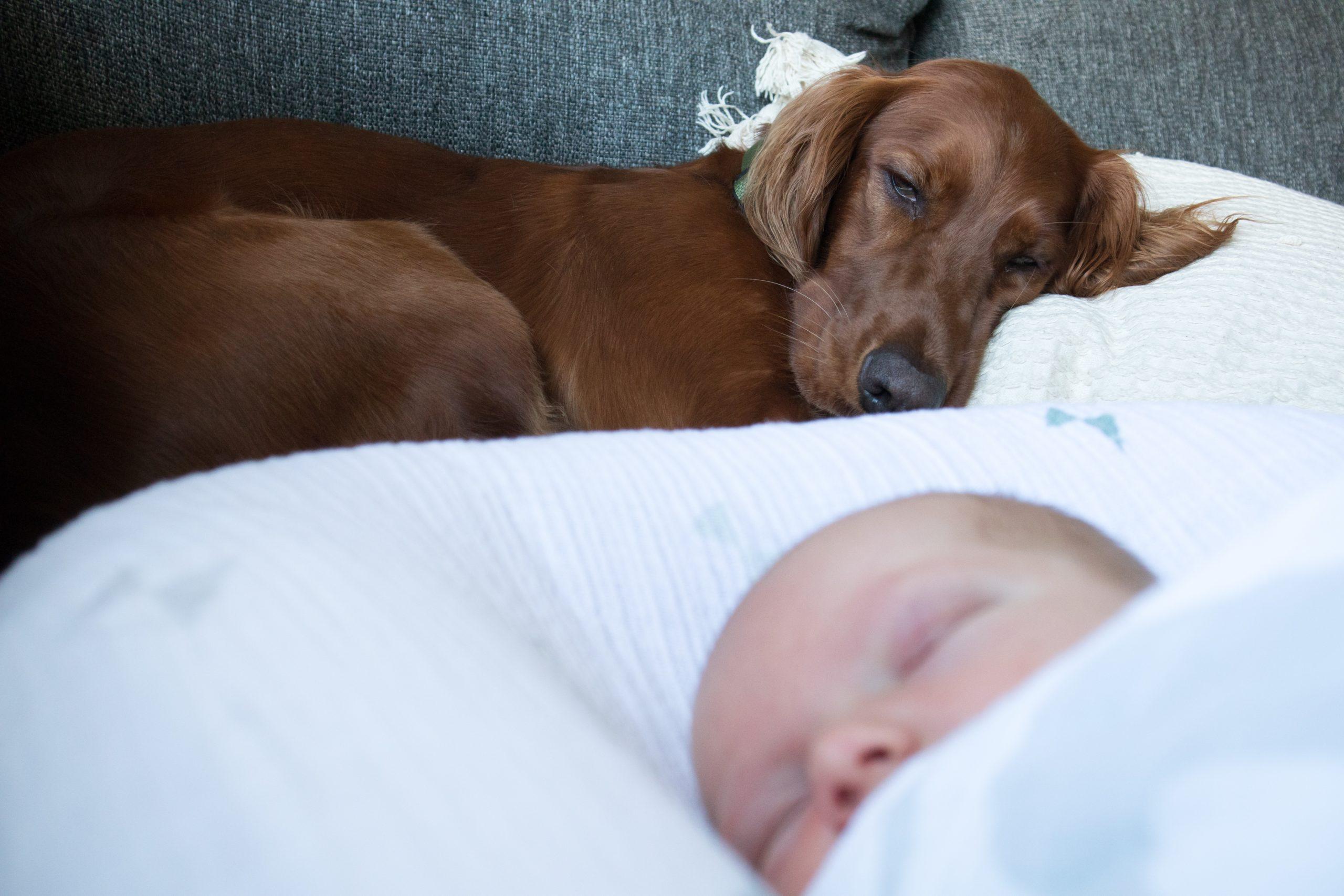 Preparare un cane all'arrivo del bebè