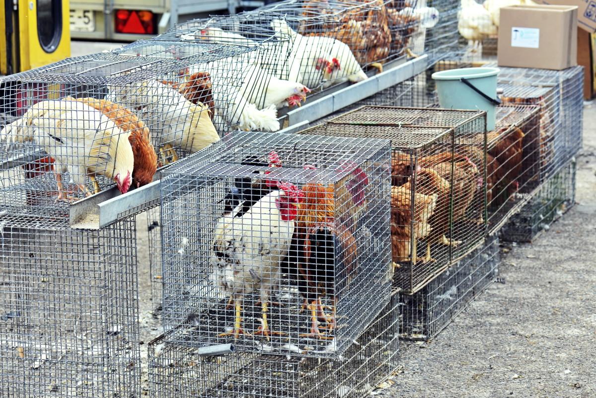 Mercati di animali in Cina