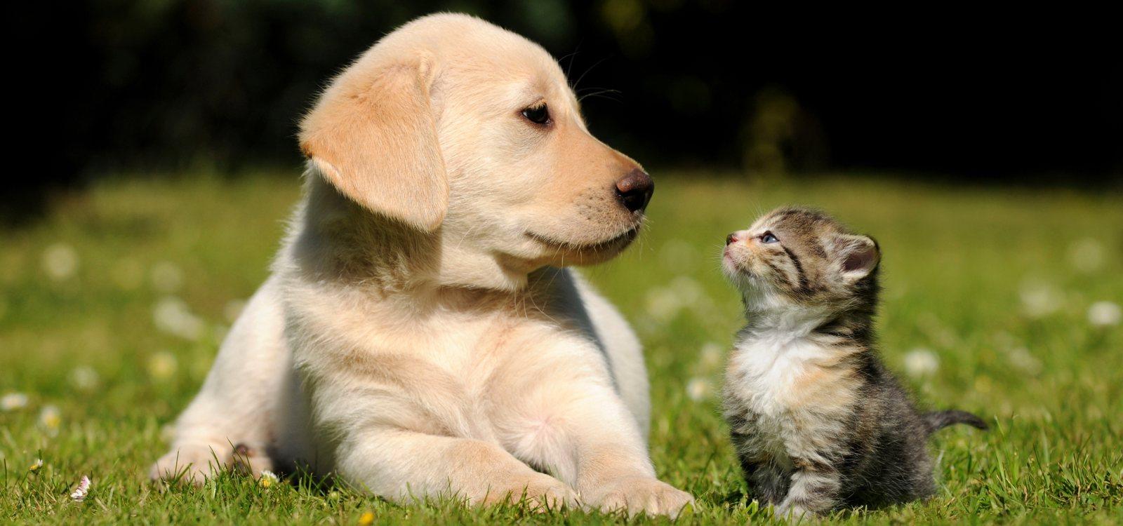 Cani e gatti non trasmettono il coronavirus