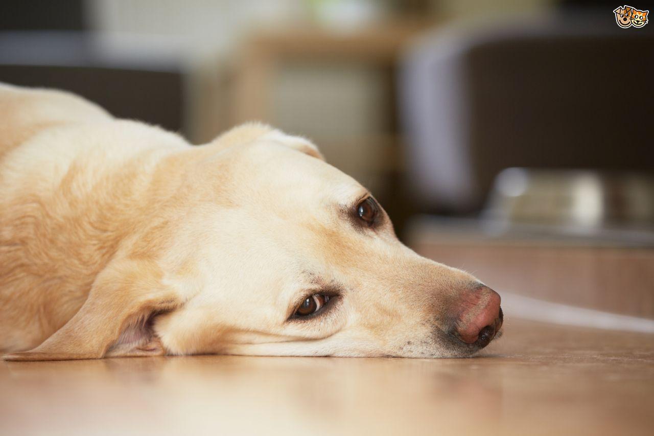 Coronavirus, gli animali domestici sono a rischio?