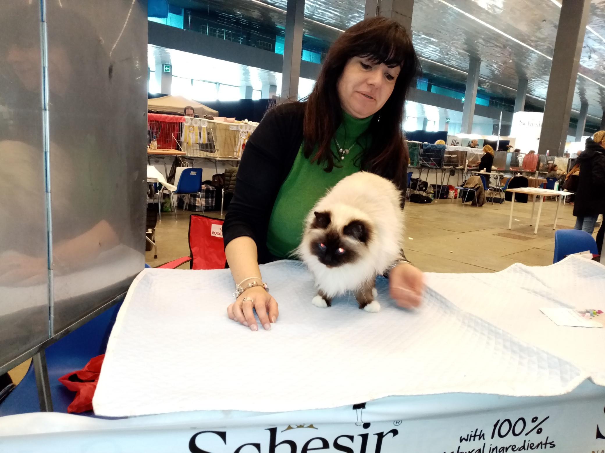 WorldCats, a Genova la mostra dei gatti più belli del mondo