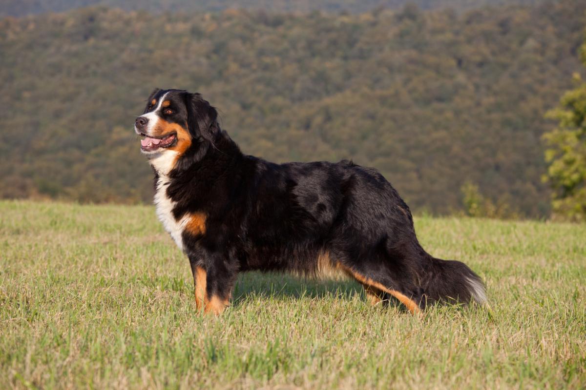 agenzia funebre cane