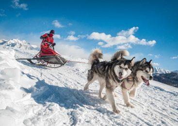 Cani da sleddog e dove trovarli, la settimana bianca in slitta