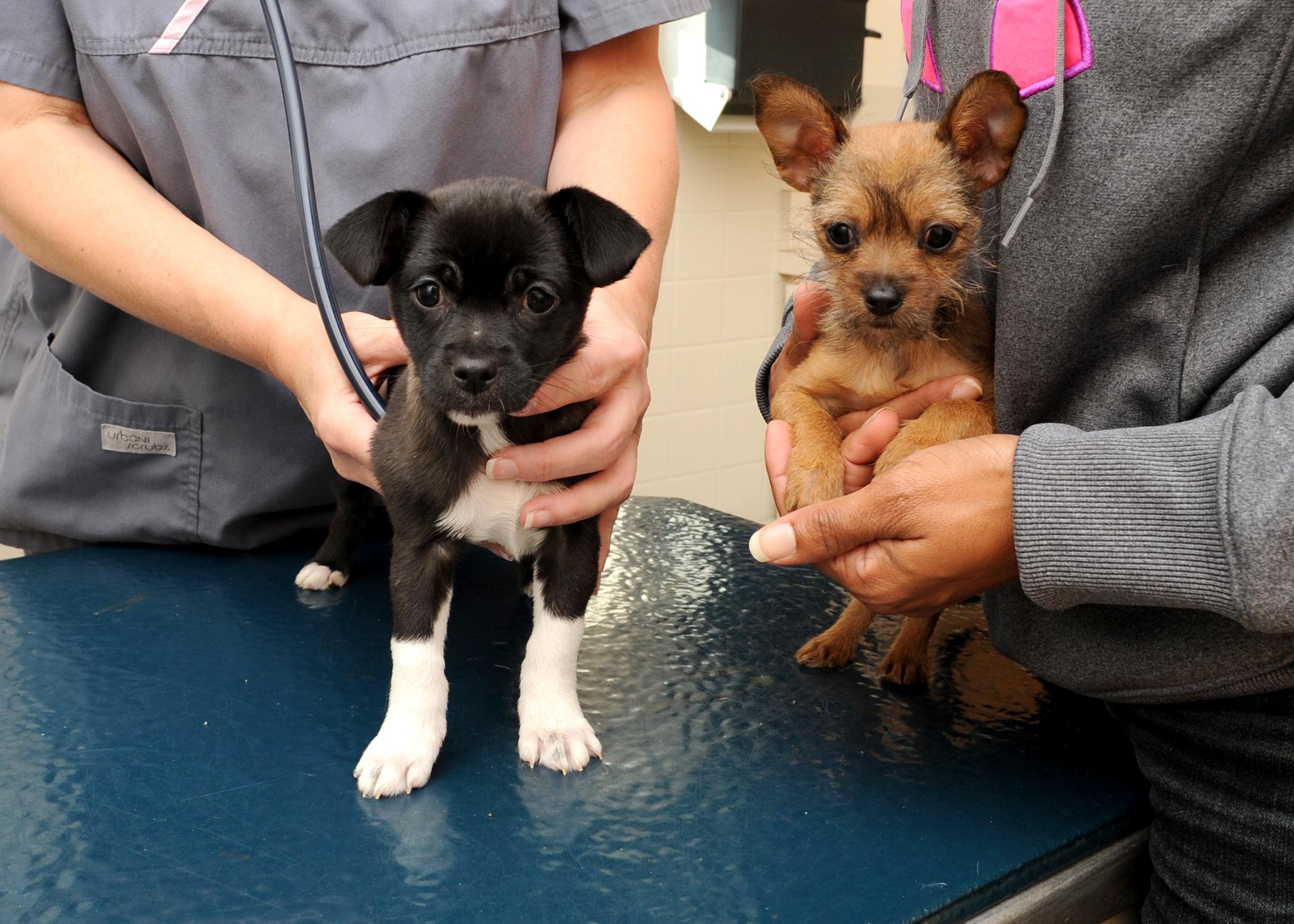 Cuccioli dal veterinario