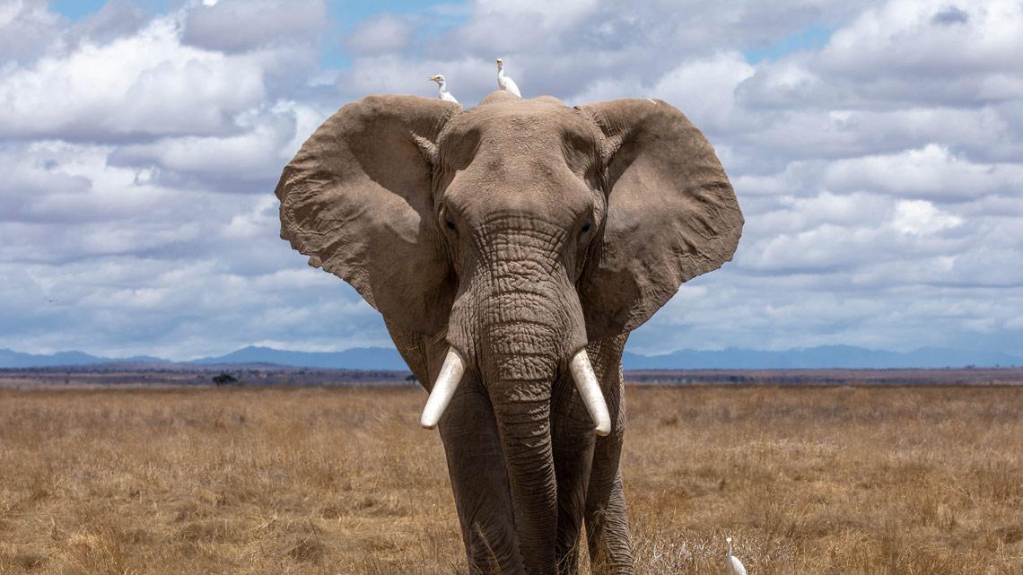 Le comunità degli elefanti