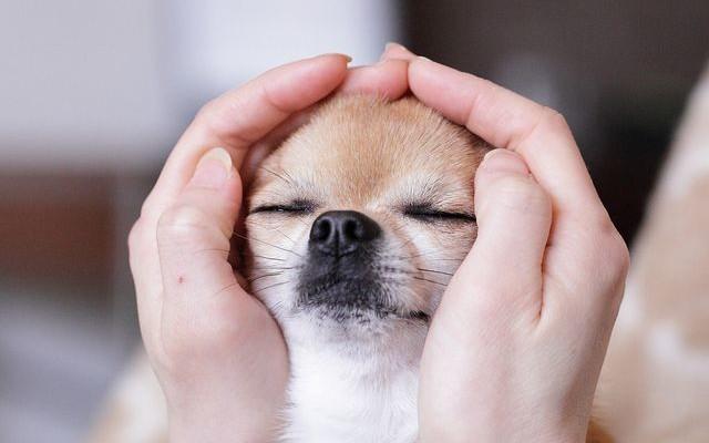Come accarezzare un cane