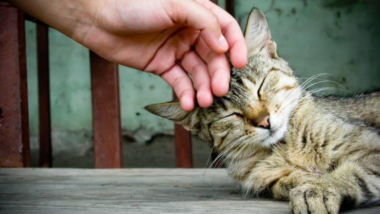 Come accarezzare cani e gatti