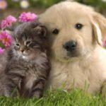 Cuccioli e adulti possono convivere?