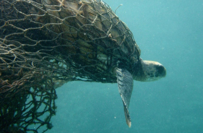 tartarughe in pericolo