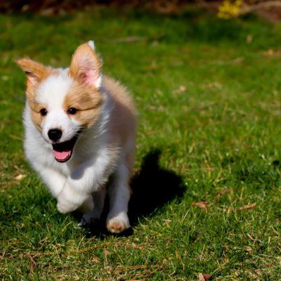 I cani sono felici? Il mondo delle emozioni a 4 zampe