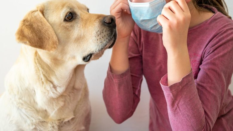I cani che fiutano il Covid