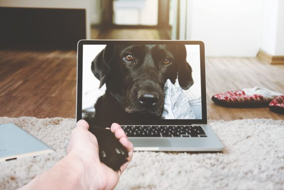 adozione 2.0 la video call