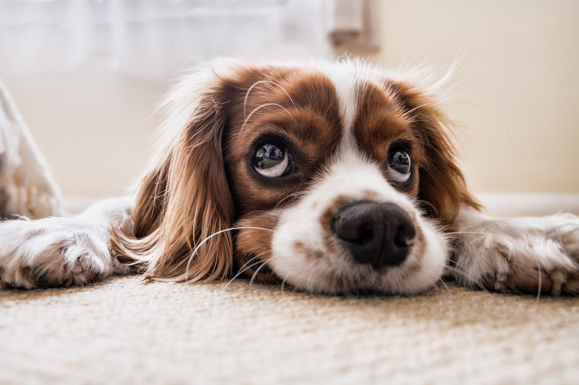 i cani sorridono tenerezza e amore