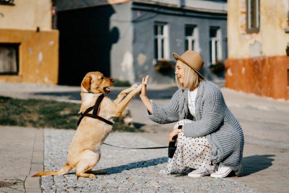 i cani sorridono e comunicano con i padroni