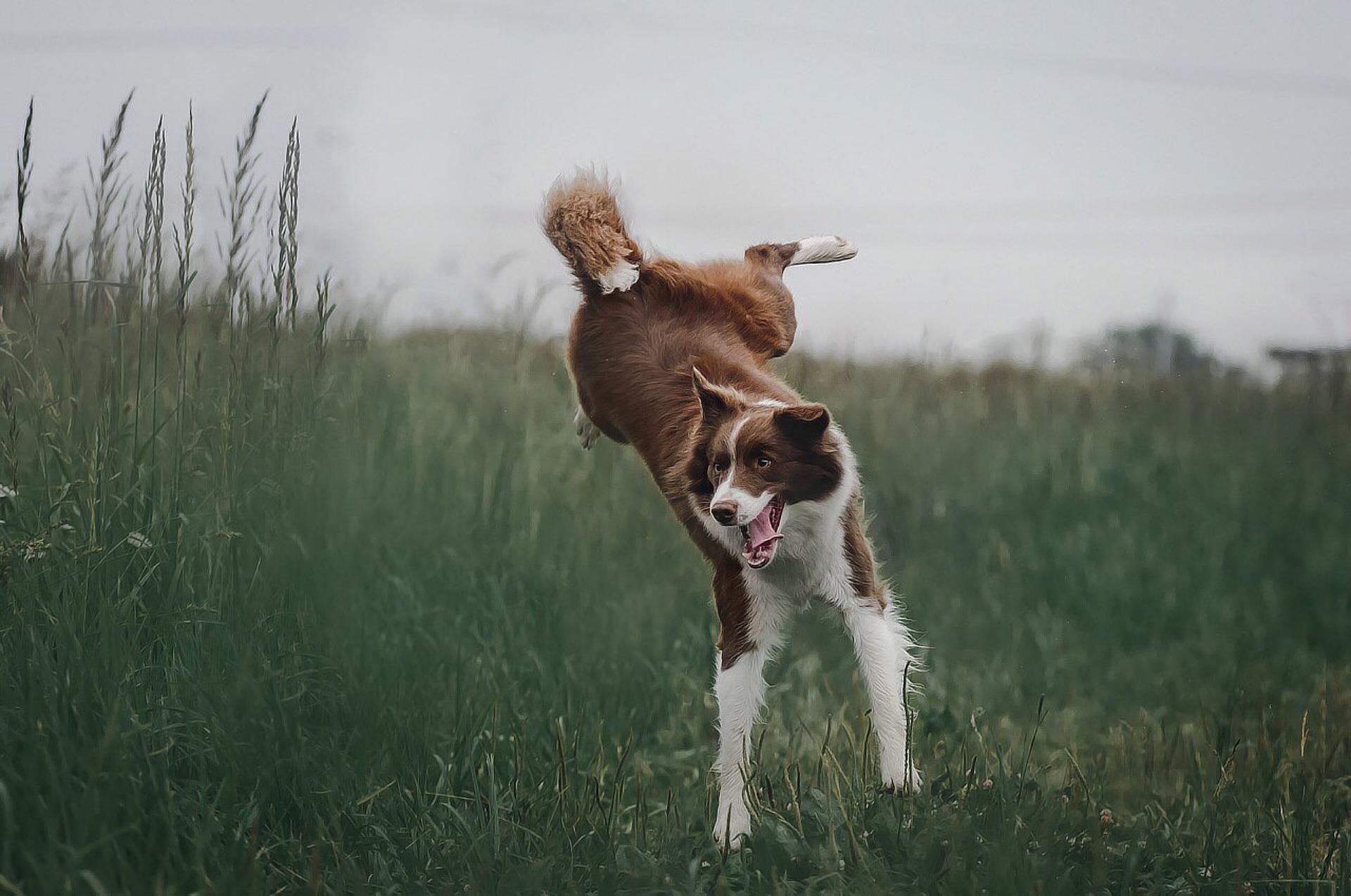 i cani sorridono e scherzano
