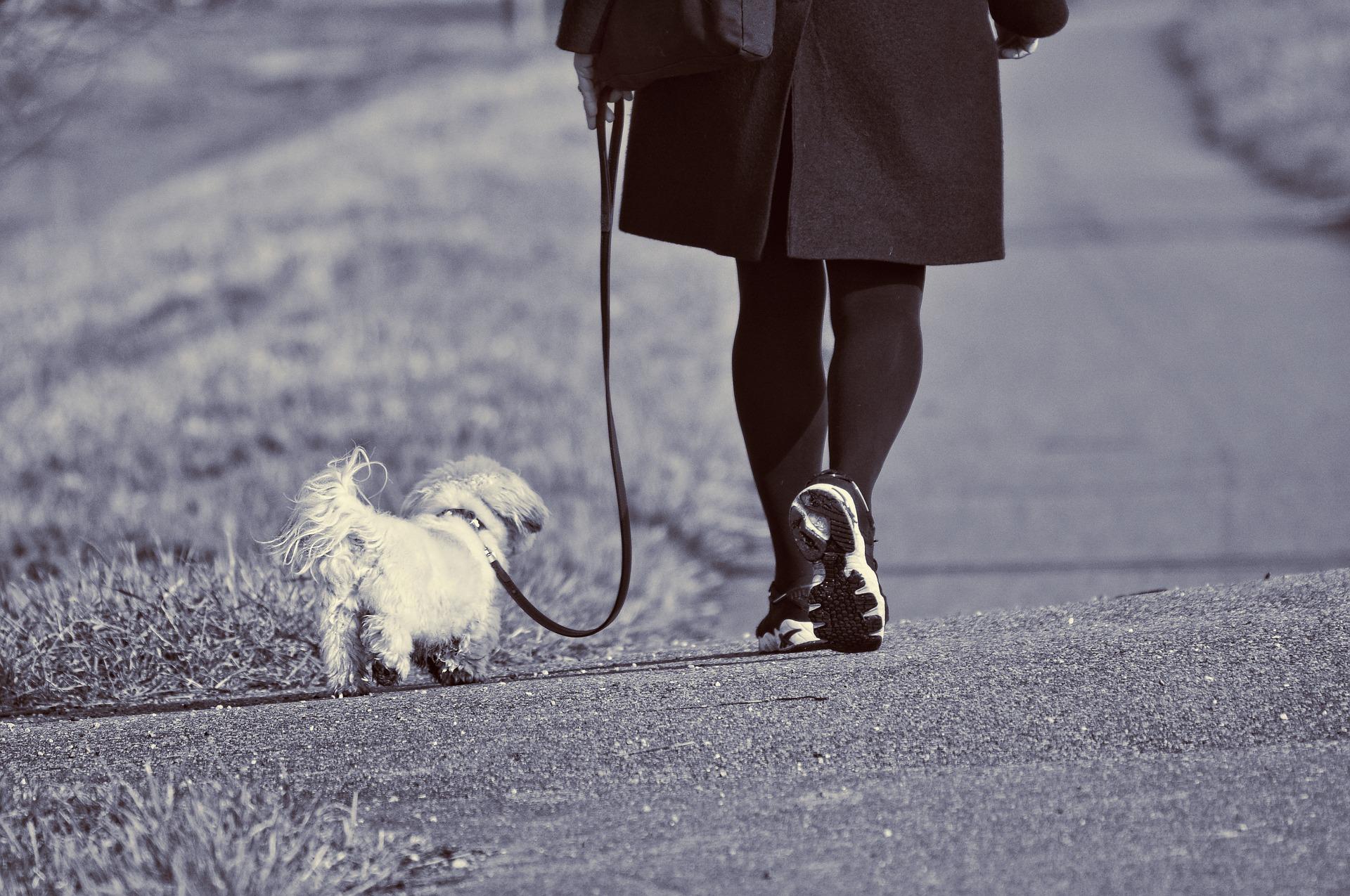 curiosità sui cani al guinzaglio