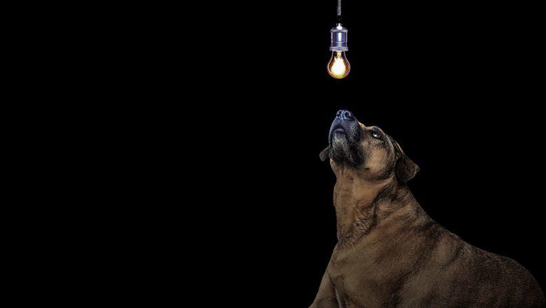 Curiosità sui cani che non conoscevi