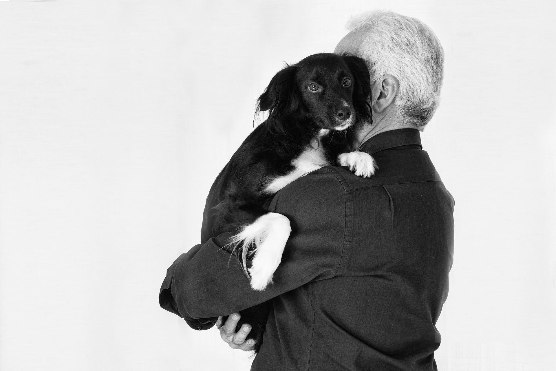 curiosità sui cani il dna è simile a quello umano