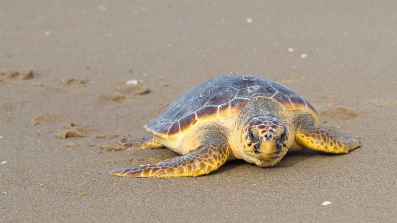 Nascita delle tartarughe